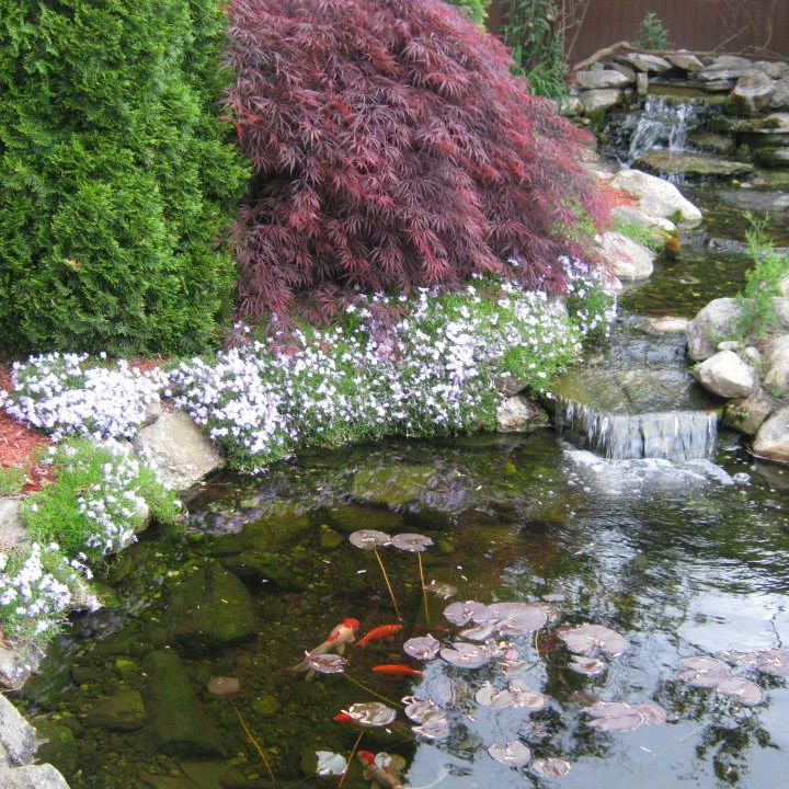 Ponds-and-Waterfalls_43